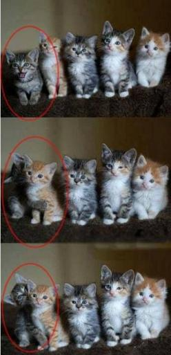 The one: Picture, Cats, Orange Cat, Animals, Kitten, Funny, Kitty, Group Photo