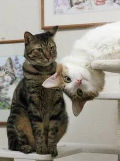 The Photobomb Cat. Perfectly Timed Pictures of Cats: Photos, Cats, Photobomb, Animals, Pet, Funny, Kitty