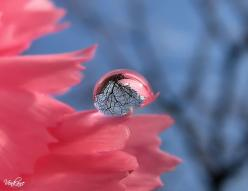 The sky is reflected in a drop of water. Beautiful scenery.: Photos, Water Drops, Waterdrop, Nature, Raindrop, Dew Drops, Dewdrop, Photography