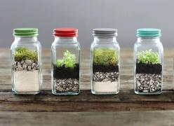 The Tiniest Garden You Can Grow on a Tabletop: Tiny Garden, Tabletop Terrariums, Tiny Tabletop, Indoor Garden, Diy, Tiny Terrariums