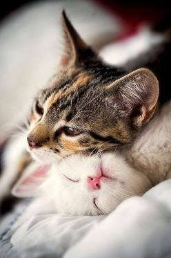 The warmth of friendship: Kitty Cats, Animals, Sweet, Meow, Pets, Kitty Kitty, Kittens, Feline, Friend