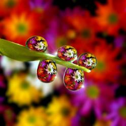 The water droplets look like teeny tiny colourful glass beads... stunning! =): Macro, Water Drops, Nature, Color, Beautiful, Dew Drops, Dewdrop, Photography, Flower