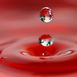 The world gets quite magical when you decide to get up close and personal. - Chris Mott - www.mottivation.com: Drip Drop, Water Drops, Red Drop, Dewdrops, Dew Drops, Rain Drops, Water Droplets, Photography