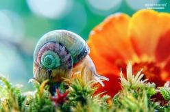 theanimalblog:    In the mood for love by *colorrrs: Snails, Animals, Nature, Colors, Colorful Snail, Beautiful, Art, Creatures, Flower