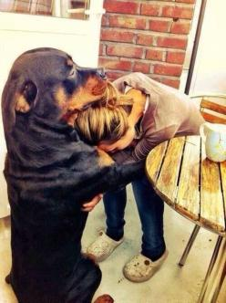 They are the best dogs!! My Monk has hugged me like this numerous times through the years.: Doggie, Animals, Best Friends, Dogs, Rottie, Pets, Puppy, Rottweiler