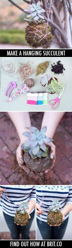 They like hanging out*.: Succulent Ball, Hanging Succulents, Diy Hanging Succulent