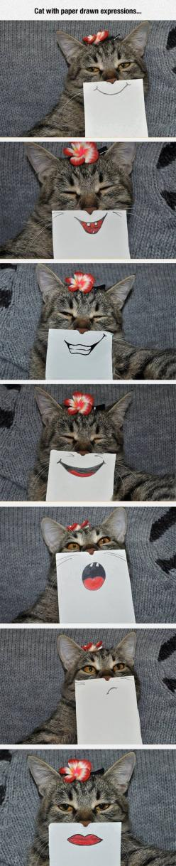 They Look So Natural: Cats, Creative Selfie, Cat Face, Funny Face, Funny Cat, Funny Emoji, Silly Cat