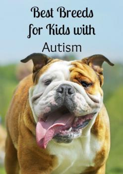 Thinking about getting a dog for a special needs child? See our picks for the best dogs for kids with autism! A special buddy can make a big difference!: Autism Service Dogs, Adhd Aspergers Dyspraxia, For Kids, Autism And Dogs, Kids With Autism, Dog Breed