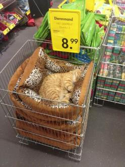 This Cat Just Stopped Caring  // funny pictures - funny photos - funny images - funny pics - funny quotes - #lol #humor #funnypictures: Cats, Animals, Cat Nap, Pet, Funny, Crazy Cat, Kitty, Cat Lady
