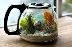 This cute terrarium in a coffee pot is super easy to DIY » Lost At E Minor: For creative people: Craft, Upcycle, Garden, Coffee Station, Coffee Shop