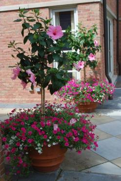 This fuchsia petunia is also from the Vista series. Though the pink hibiscus standards are the star of the show, the small petunias add lots of texture and volume. The hibiscus trees are weighted visually at the bottom.: Hibiscus Tree, Container Garden, H
