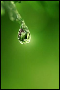 This is a great example of monochromatic style outside of the typical black & white.: Dewdrop Raindrop Waterdrop, Color Verde, Drop, Dewdrops Raindrops, Dew Drops, Rain Drop