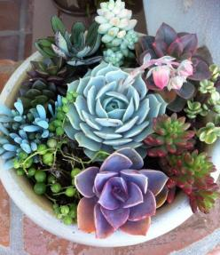 This is how I want to plant the succulents I saved from the flood. I think I might start collecting plants. Apparently I'm now under the influence of Dr. Balcer.: Pretty Succulent, Dish Garden, Succulent Plants, Gardens, Delicious, Succulent Arrangeme