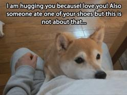 This is not about that...: Funny Animals, Shiba Inu, Dogs, Pet, Funny Stuff, Humor, Funnies