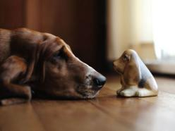 this is sooo cute!  I love basset hounds I had two may years ago, and I still miss their sweet ways.: Hound Dog, Animals, Dogs, Bassethounds, Pets, Adorable