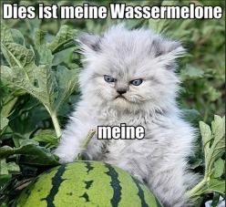 This is super hilarious at 5:55 in the morning when you've been up all night with insomnia. Seriously, my cheeks hurt, I'm laughing so much! I need to go to bed!: Cats, Animals, Funny Stuff, Funnies, Watermelon, Kitty