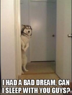 This is totally Marshall...And Lilly is the other child that can't sleep in the room by herself so she has to come snuggle as well. Our dogs are babies...: Animals, Dogs, Stuff, Pet, Funny, Bad Dreams, Funnies
