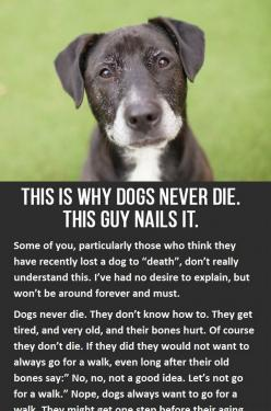 This is why dogs never die. You have to click to read the whole thing, but it's so worth it! http://iheartdogs.com/this-is-why-dogs-never-die/: Doggie, Dogs Quotes, Animal Stuff, Sad Animal Eyes, Dog Died Quotes, Dog Quotes, Dogs Never Die, Worth It,
