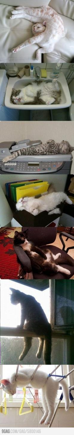 This is why I love cats: Sit, I Love Cats, Fit, Animals, Funny Cats, Crazy Cat, Kitty, Cat Lady