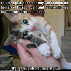 This reminds me of my SophieBear. I miss by little munchkin. I wish she would come home.: Cats, Animals, Sweet, Pets, Funny, Kittens, Kitty