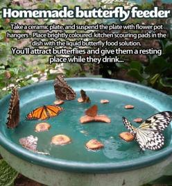 This would be so neat!: Homemade Butterfly, Idea, Garden Outdoor, Butterflyfeeder, Butterflies, Butterfly Feeder, Gardening Outdoor, Butterfly Garden