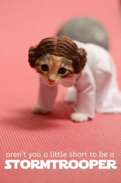Tiny Kittens Dressed As Iconic Fantasy Characters Are The Best Tiny Kittens: Cats, Animals, Star Wars, Funny, Kittens, Princesses, Kitty, Starwars, Princess Leia