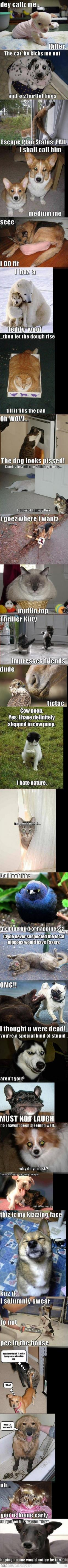 To funny < that's not my post, but yes it's cute, but are you dedicating it to funny or is it just TOO funny?: