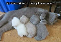 Tooo much funny.... I adore the shades of kitten here.: Cats, Animals, Pet, Funny, Toner, Kittens, Kitten Printer, Kitty, Ink