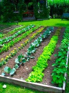 Top Five Tips For A Beautiful And Bountiful Vegetable Garden: Green Thumb, Backyard Vegetable Garden, Gardens, Vegetables Garden, Vegetable Gardening