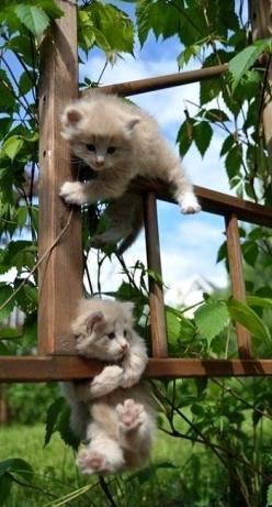"(Top one) ""Dude? Could you fricken help me? (Bottom one) ""NO! You know I'm stuck too?"": Cats, Kitty Cat, Animals, Pets, Kitty Kitty, Adorable, Kittens, Kitties, Cat Lady"