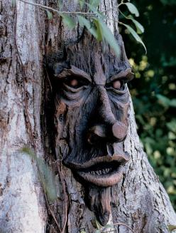 Tree Faces: Friendly Ent Tree Face | Gardener's Supply: Awesome Trees, Ancient Trees, Beautiful Trees, Carved Trees, Amazing Trees, Enchanted Trees, Tree Faces, Friendly Ent