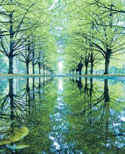 Tree Lane Reflections: Nature, Green, St Petersburg, Beautiful, Trees, Reflections, Places, Photography