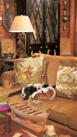 Two sleepy Cavaliers in caramel colored room found in an English Country Home...: Dogs, Sweet, Interiors, Posts, English Country Homes, Room, King Charles Spaniels, Animal
