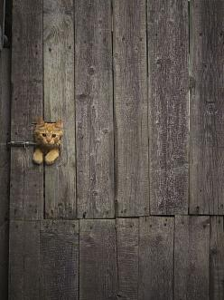 Uh......hello I think I'm uh......well stuck can you help me please.: Doors, Cats, Kitty Cat, Animals, Kitten, Peek A Boo, Door Handle