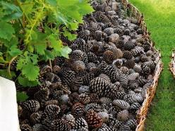 Using pine cones in the garden for bedding, keeps the pups and cats out  looks awesome.: Cat, Garden Ideas, Yard, Mulch, Pinecones, Outdoor, Pine Cones, Flower Beds, Diy