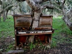 USSR abandoned places in decay - A tree growing through an abandoned piano: Music, Piano Tree, Nature, Art, Beautiful, Trees, Photo, Abandoned Places