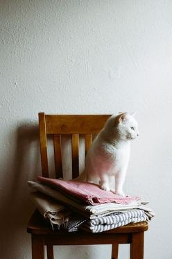 V. Cat \\\\ james fitzgerald III: Kitty Cats, Chair, White Cats, Fur, Chat, Feline, Adorable Cats, Cats Kittens, Animal
