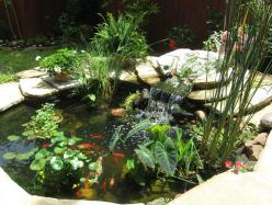 Variety of ponds plants including elephant ear which will grow in water.  Got to pick one up soon!: Backyard Ponds, Water Features, Backyard Pools Patios Ponds, Garden Design Pond Plants, Garden Ponds, Fish Pond Plant