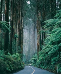 Victoria Canada, Black Spur Drive. Look at those gorgeous trees.: Spur Drive, Nature, Favorite Place, Trees, Forest, Places, Travel, Black Spur