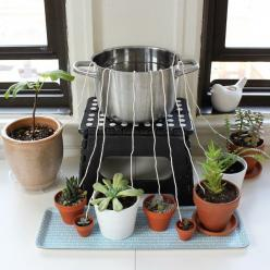 Warmer weather = more traveling. Don't let your houseplants suffer while you're away from home! Rig up this DIY self-watering wicking system. It's a surefire way to keep your plants happy and healthy using ordinary materials you probably alrea