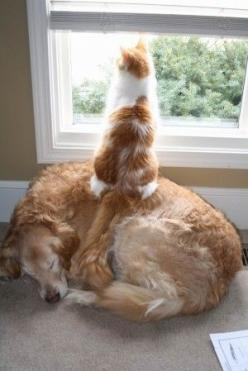 Watching for Squirrels.: Cats, Funny Animals, Dogs, Friends, Funny Cat, Pets, Funnies, Humor, Things
