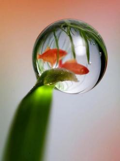 Water droplet and fish...very creative!: Water Droplet And Fish Love, Dew Droplets Frost Water, Droplets Water, Art, Bubbles Drip, Drops Bubbles, Water Droplets