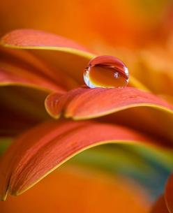 Water Droplet: Macro, Water Drops, Waterdrop, Color, Art, Dew Drop, Dewdrops, Water Droplets, Flower