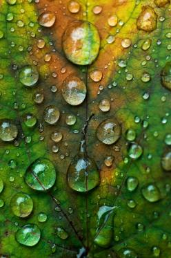 water drops on a leaf (from - http://thishopelessromantic.tumblr.com/post/19776155024): Water Drops, Nature, Green, Drops, Raindrops, Dewdrops, Rain Drops, Dew Drops, Water Droplets