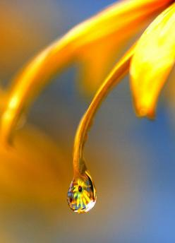 .: Water Drops, Waterdrop, Drops, Dew Drops, Rain Drops, Yellow, Dewdrop, Photo