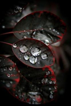 Water On Black Leaves | See More Pictures | #SeeMorePictures: Water Drops, Waterdrop, Nature, Color, Dew Drops, Rain Drops, Black, Photography