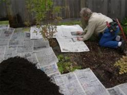 Wet newspapers and put layers around the plants overlapping as you go; cover with mulch and forget about weeds. Weeds will get through some gardening plastic; they will not get through wet newspaper. Good composting!: Green Thumb, Wet Newspapers, Garden O