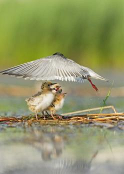 What a shot! ~: Mothers Love, Animals, Umbrellas, Nature, National Geographic, Beautiful Birds, Photo
