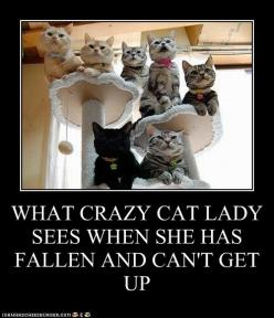 WHAT CRAZY CAT LADY SEES WHEN SHE HAS FALLEN AND CAN'T GET UP - Cheezburger: Crazy Cats, Animals, Crazycatlady, Funny Cats, Funny Stuff, Lady Sees, Humor, Crazy Cat Lady