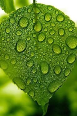 When is the last time you paused to observe what the rain came and then left behind?  The Observation of Patterns is a Choice.: Water Drops, Leave, Turquoise, Color, Raindrop, Dew Drops, Rain Drops, Dewdrop, Water Droplets